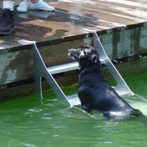 Dog Step Ladder